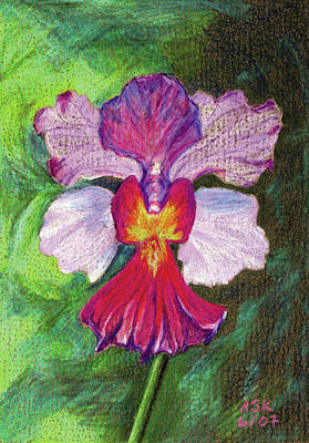 Drawing - Orchid by Anne Katzeff