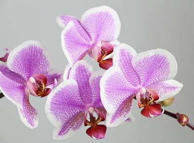 Orchid Array Art Print