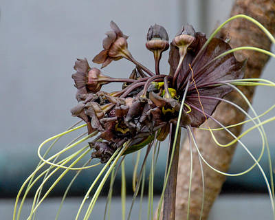 Photograph - Orchid At The Anna Scripps Whitcomb Conservatory by Randy J Heath