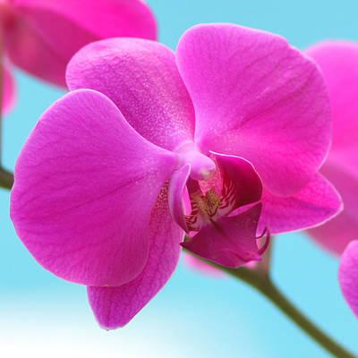 Orchid At The Ocean Closeup Art Print by Michi Sherwood