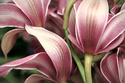 Orchid Ballet Art Print