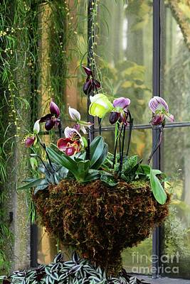 Photograph - Orchid Basket by Cindy Manero