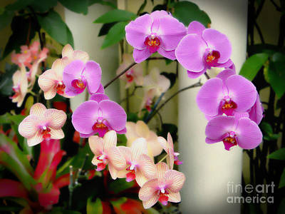 Photograph - Orchid Beauties by Sue Melvin