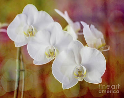 Photograph - Orchid Beautiful by Mary Bellew