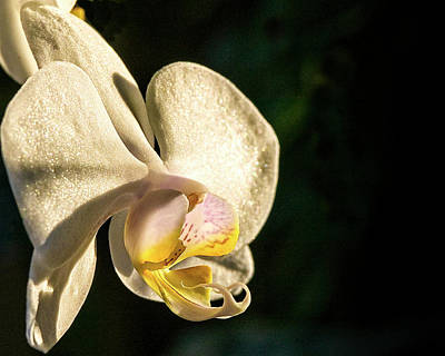 Photograph - Orchid Bloom by Gary Shepard