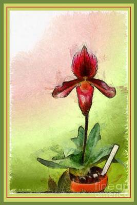Painting - Orchid Botanical Print 2 by Earl Jackson