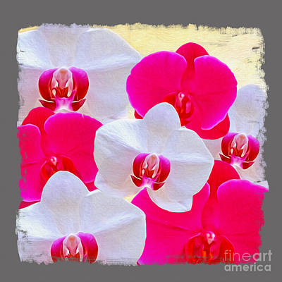 White Orchids Photograph - Orchid Canvas by Laura D Young