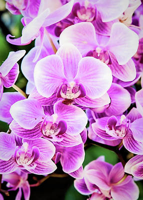 Wall Art - Photograph - Orchid Cascade by Jessica Manelis