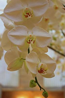 Photograph - Orchid Cascade by Michiale Schneider