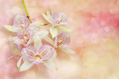 Photograph - Orchid - Caulocattleya - The Twinkle In My Eye by Mike Savad