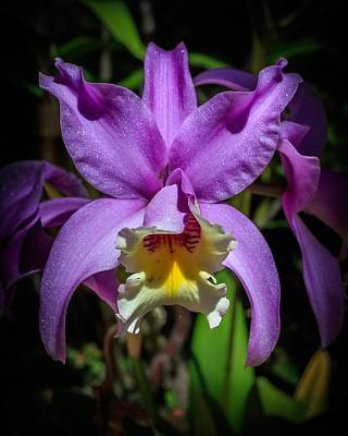 Photograph - Orchid by Christopher Perez