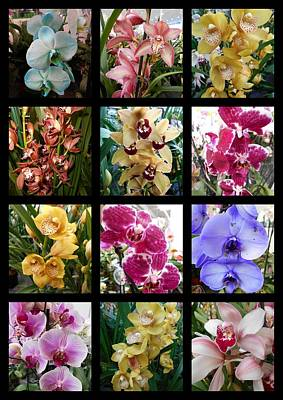 Photograph - Orchid Collage  by Erika H