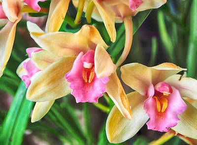 Photograph - Orchid Cymbidium Evening Star by C H Apperson