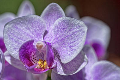 Photograph - Orchid by Dan McManus