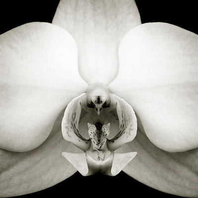 Photograph - Orchid by Dave Bowman