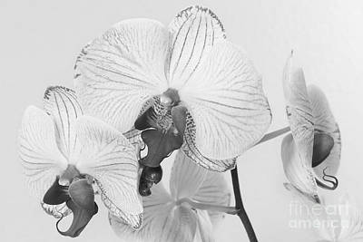 Photograph - Orchid Delight by Anita Oakley