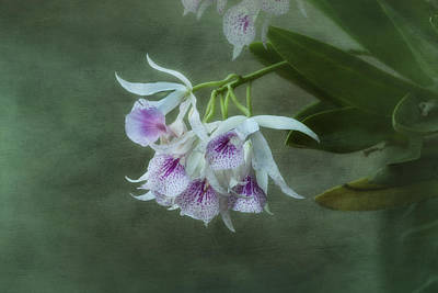 Photograph - Orchid Delight by Kim Hojnacki