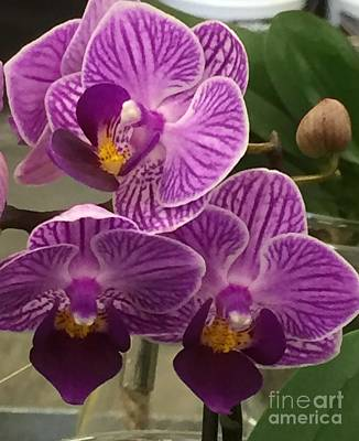 Photograph - Orchid Delight by Nona Kumah
