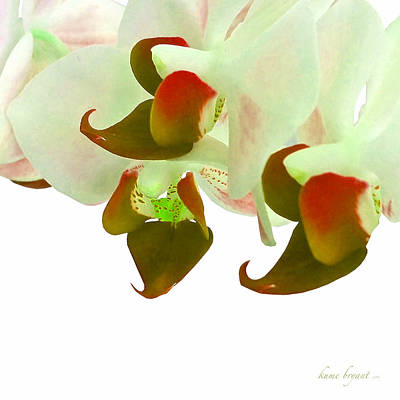 Digital Art - Orchid Dream by Kume Bryant