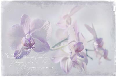 Wall Art - Mixed Media - Orchid Dreams by Amanda Lakey
