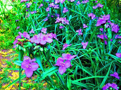 Photograph - Orchid Dreams by Deborah jordan Sackett