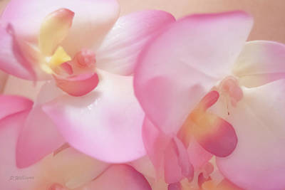 Photograph - Orchid Dreams  by Pamela Williams