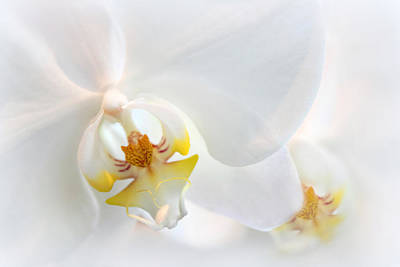 Photograph - Orchid Echo by Jessica Jenney