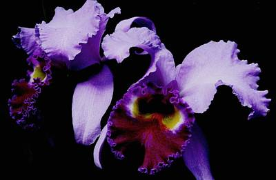 Photograph - Orchid Elegance by Angela Davies