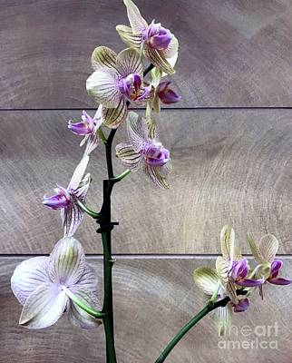 Photograph - Orchid Elegance by Barbie Corbett-Newmin