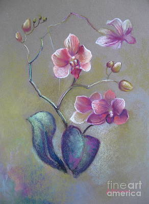 Orchid Drawing - Orchid by Elena Oleniuc