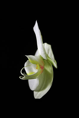 Photograph - Orchid by Elsa Marie Santoro