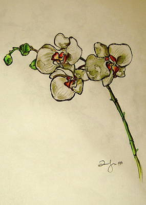 Orchid Drawing - Orchid by Emily Jones
