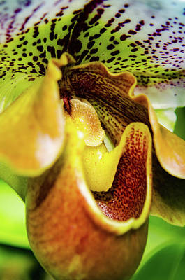 Photograph - Orchid Faces by Stewart Helberg