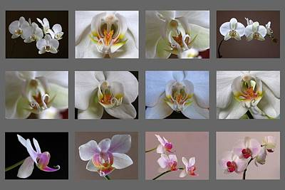 Photograph - Orchid Fine Art Collection by Juergen Roth