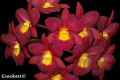 Photograph - Orchid Floral Arrangement by Gary Crockett