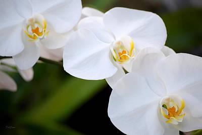 Photograph - Orchid Flow by Deborah  Crew-Johnson