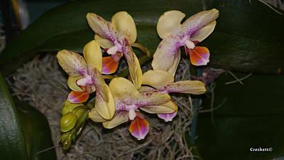 Photograph - Orchid Flower 1 by Gary Crockett