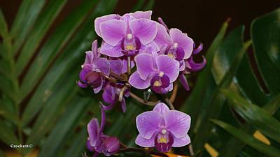 Photograph - Orchid Flower 25 by Gary Crockett