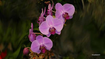 Photograph - Orchid Flower 26 by Gary Crockett