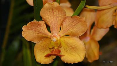 Photograph - Orchid Flower 40 by Gary Crockett