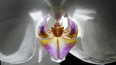 Photograph - Orchid Flower 45 by Gary Crockett