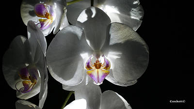 Photograph - Orchid Flower 46 by Gary Crockett