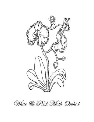 Drawing - Orchid Flower Botanical Drawing Black And White by Irina Sztukowski