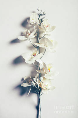 Photograph - Orchid Flower On White Background. Minimalism. by Michal Bednarek