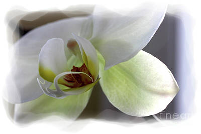 Photograph - Orchid For Valentines Day by David Bearden