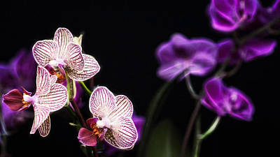 Photograph - Orchid Fractals by Cameron Wood