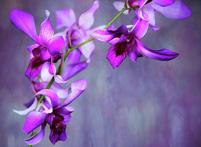 Photograph - Orchid Framing by Jenny Rainbow