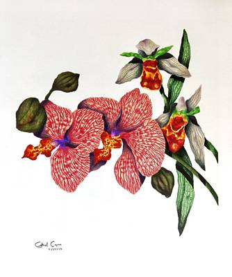 Drawing - Orchid by Gabriel Cajina