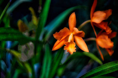 Orchid Garden Original by Ches Black