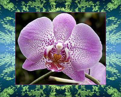 Photograph - Orchid Goodness by Bell And Todd